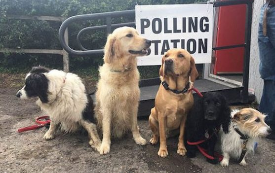 dogs-at-polling-stations-pictures-962417